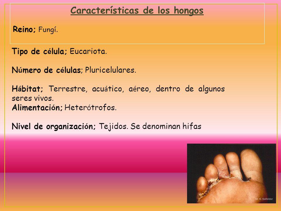 Características de los hongos Reino; Fungí. Tipo de c é lula; Eucariota. N ú mero de c é lulas; Pluricelulares. H á bitat; Terrestre, acu á tico, a é