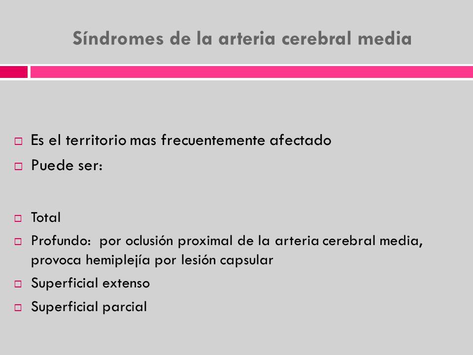 Síndromes de la arteria cerebral media Es el territorio mas frecuentemente afectado Puede ser: Total Profundo: por oclusión proximal de la arteria cer