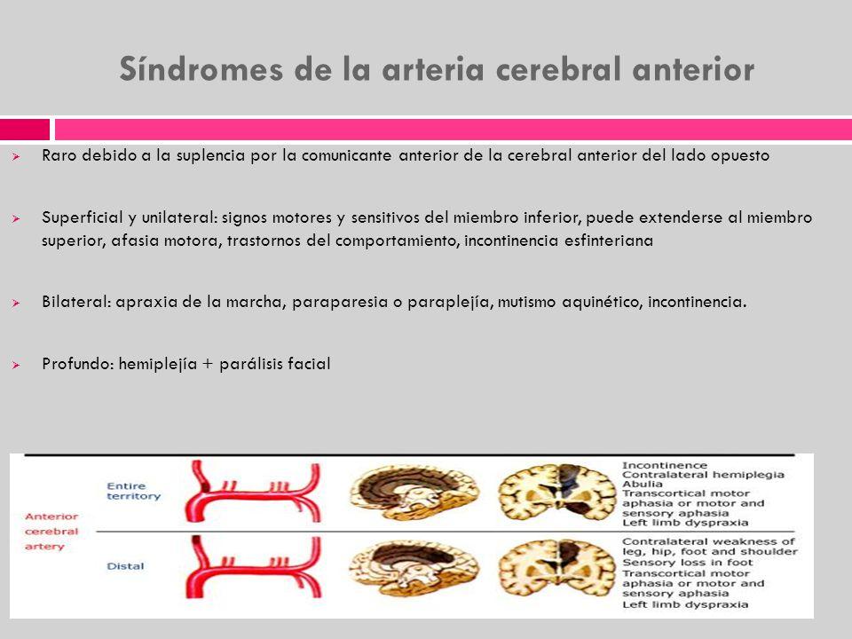 Síndromes de la arteria cerebral anterior Raro debido a la suplencia por la comunicante anterior de la cerebral anterior del lado opuesto Superficial