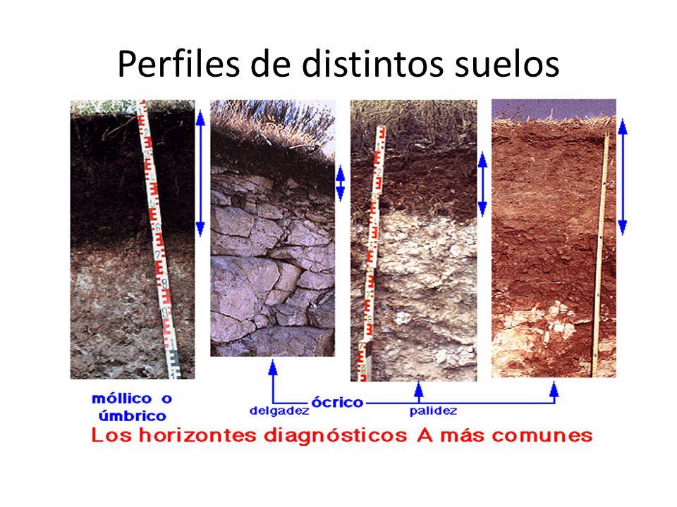 Perfiles de distintos suelos
