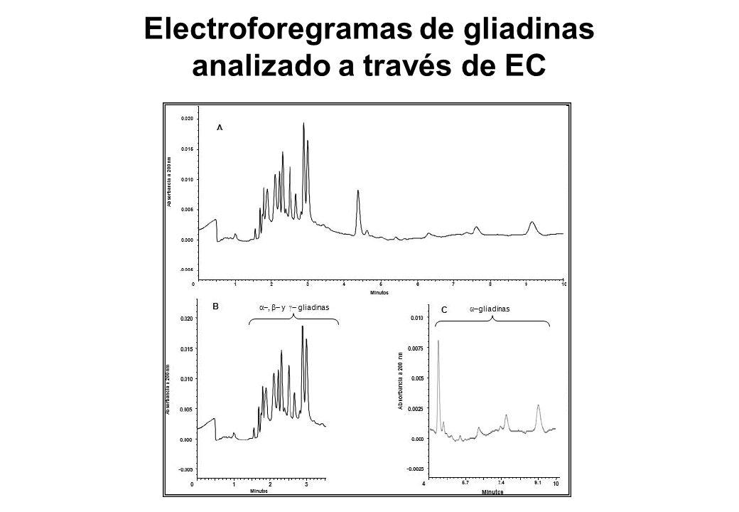 Electroforegramas de gliadinas analizado a través de EC
