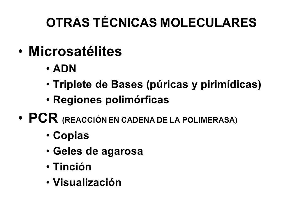 OTRAS TÉCNICAS MOLECULARES Microsatélites ADN Triplete de Bases (púricas y pirimídicas) Regiones polimórficas PCR (REACCIÓN EN CADENA DE LA POLIMERASA