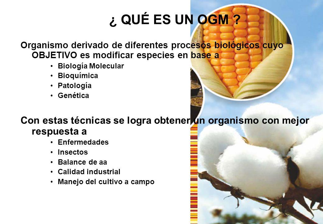 ¿ QUÉ ES UN OGM ? Organismo derivado de diferentes procesos biológicos cuyo OBJETIVO es modificar especies en base a Biología Molecular Bioquímica Pat