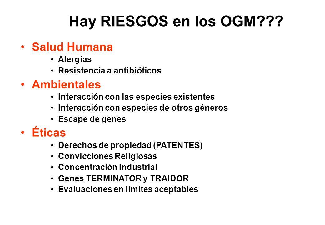 Hay RIESGOS en los OGM??? Salud Humana Alergias Resistencia a antibióticos Ambientales Interacción con las especies existentes Interacción con especie