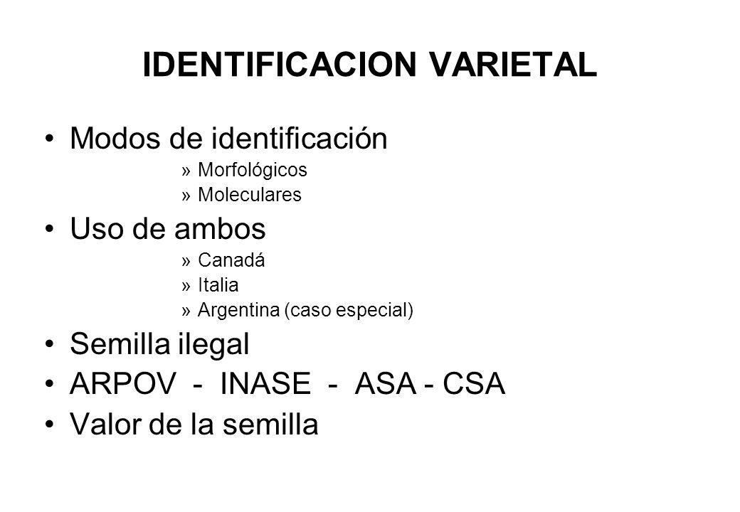 IDENTIFICACION VARIETAL Modos de identificación »Morfológicos »Moleculares Uso de ambos »Canadá »Italia »Argentina (caso especial) Semilla ilegal ARPO