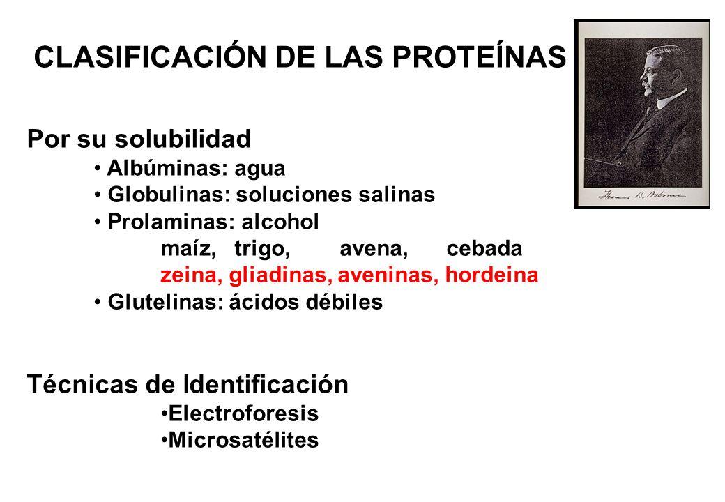 CLASIFICACIÓN DE LAS PROTEÍNAS Por su solubilidad Albúminas: agua Globulinas: soluciones salinas Prolaminas: alcohol maíz, trigo, avena, cebada zeina,