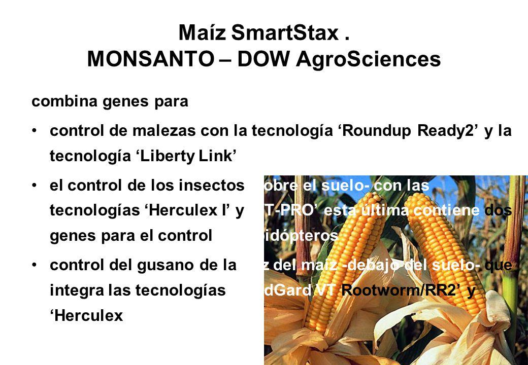 Maíz SmartStax. MONSANTO – DOW AgroSciences combina genes para control de malezas con la tecnología Roundup Ready2 y la tecnología Liberty Link el con