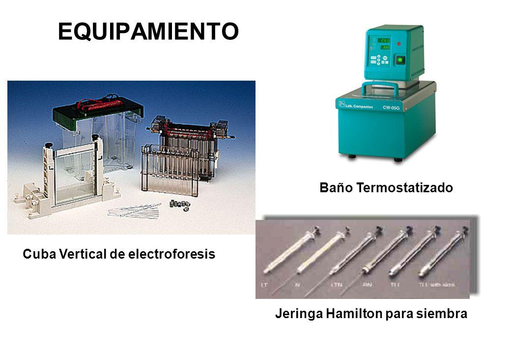 EQUIPAMIENTO Cuba Vertical de electroforesis Baño Termostatizado Jeringa Hamilton para siembra