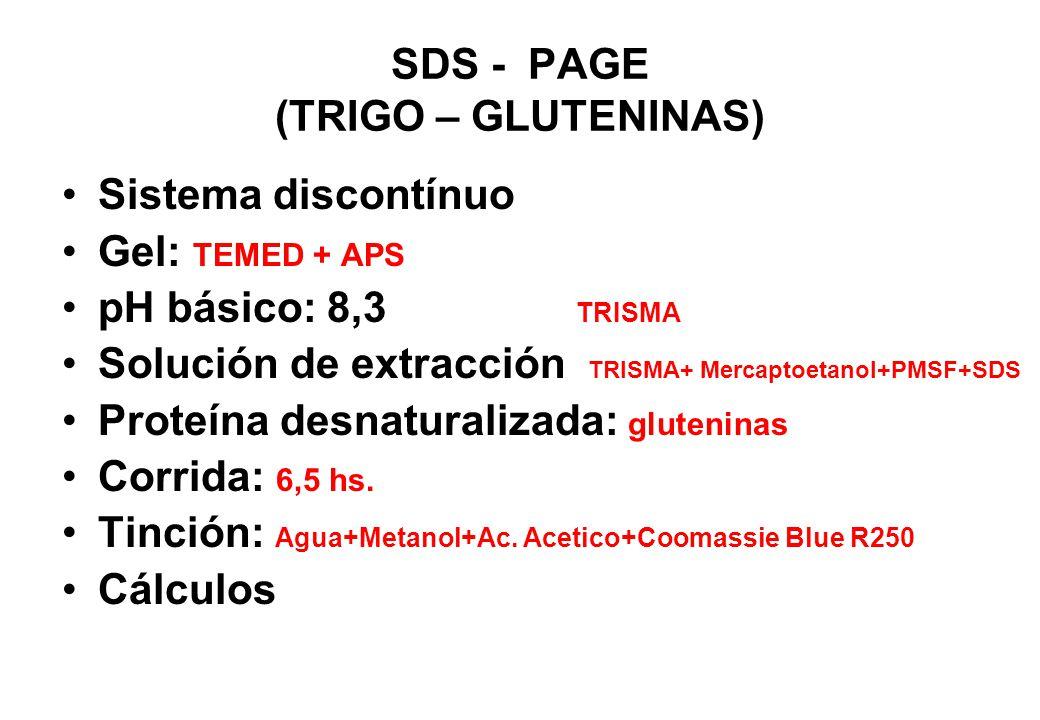 SDS - PAGE (TRIGO – GLUTENINAS) Sistema discontínuo Gel: TEMED + APS pH básico: 8,3 TRISMA Solución de extracción TRISMA+ Mercaptoetanol+PMSF+SDS Prot