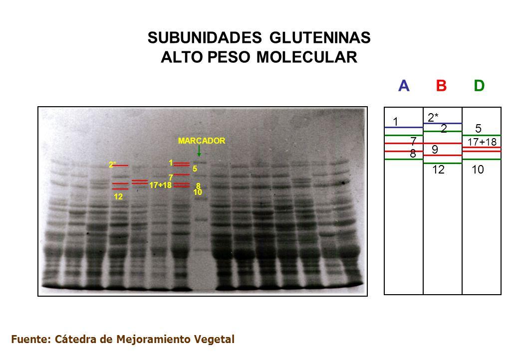 A – PAGE (TRIGO – GLIADINAS) Sistema contínuo GEL: acd ascórbico + SO 4 Fe x 7H 2 O+ H 2 O 2 pH ácido: 3,1 – 3,2 Lactato de Al + Acd Láctico Solución de extracción Etanol %70 Proteína nativa: prolaminas Corrida: 3 – 3,5 hs.