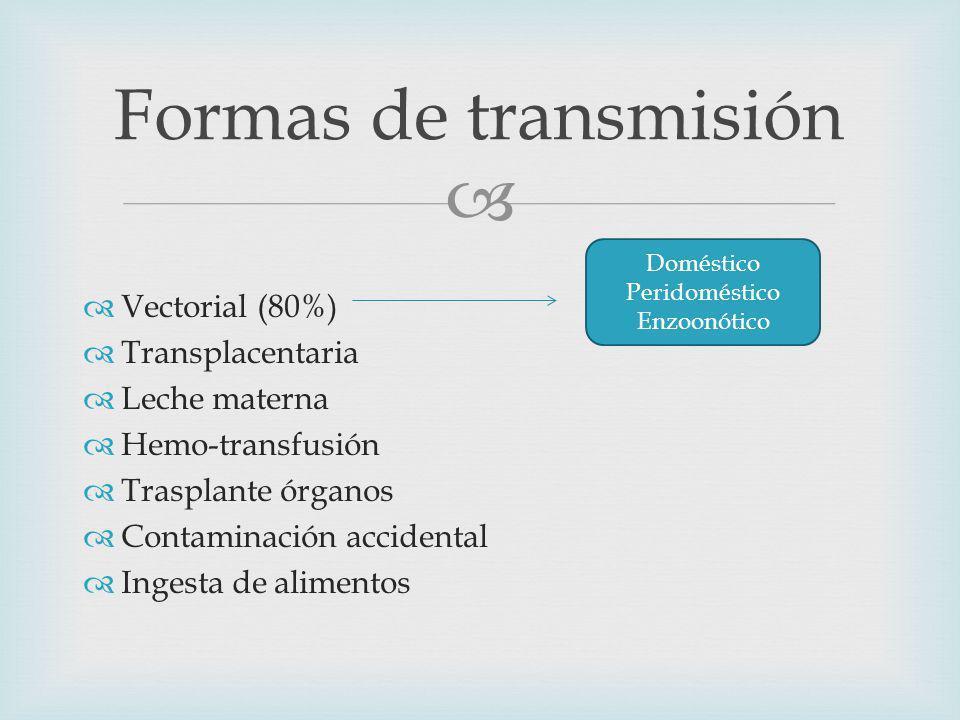 Vectorial (80%) Transplacentaria Leche materna Hemo-transfusión Trasplante órganos Contaminación accidental Ingesta de alimentos Formas de transmisión Doméstico Peridoméstico Enzoonótico