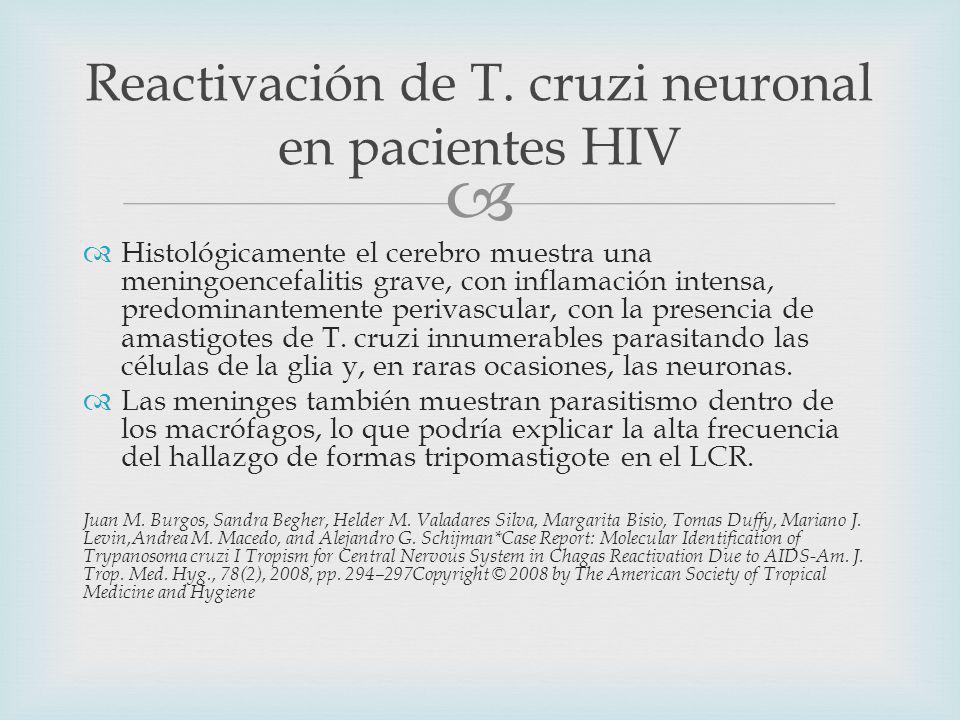 Histológicamente el cerebro muestra una meningoencefalitis grave, con inflamación intensa, predominantemente perivascular, con la presencia de amastigotes de T.