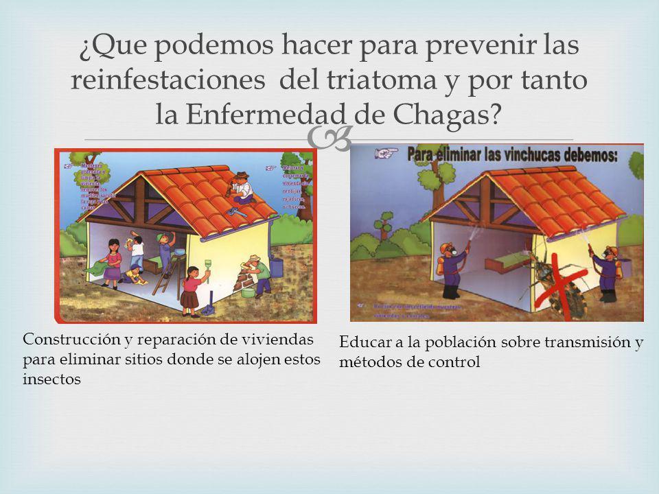 ¿Que podemos hacer para prevenir las reinfestaciones del triatoma y por tanto la Enfermedad de Chagas.