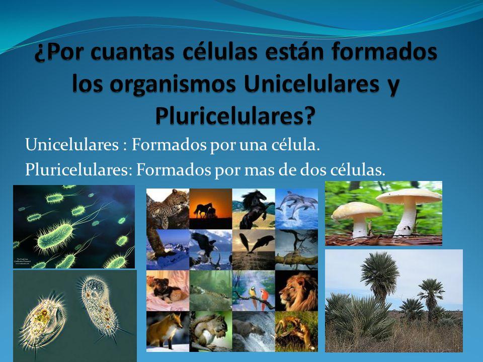 Unicelulares : Formados por una célula. Pluricelulares: Formados por mas de dos células.