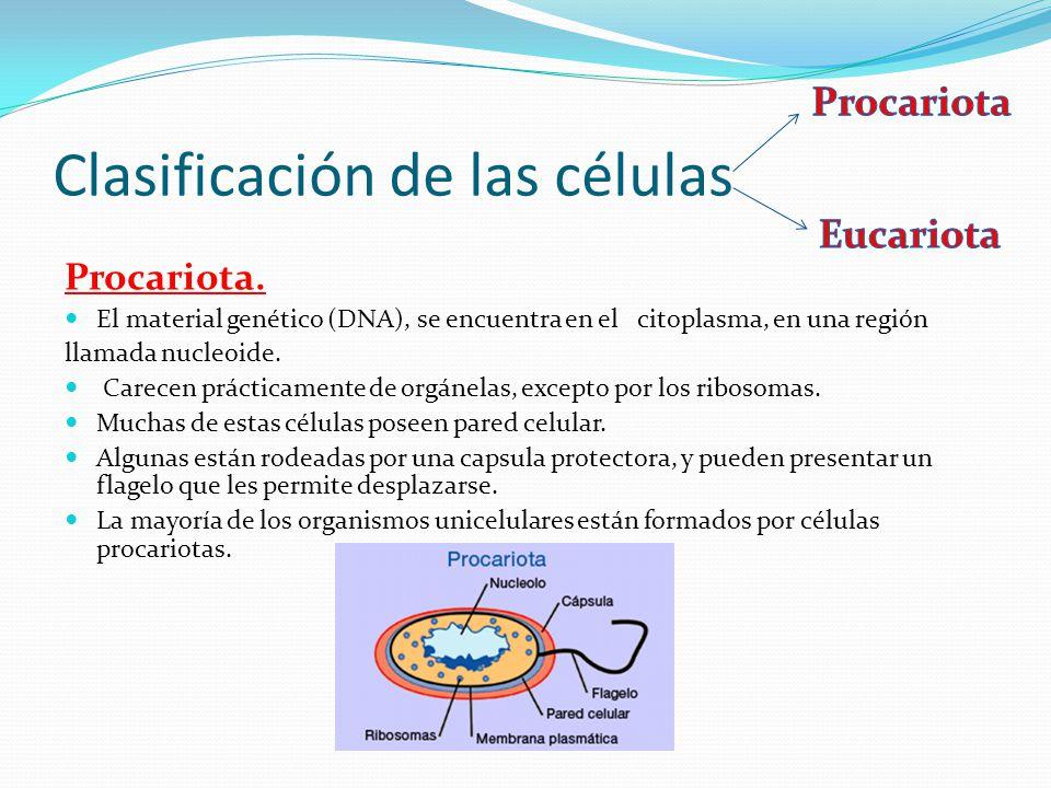 Clasificación de las células Procariota.
