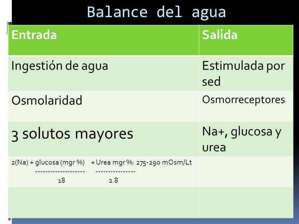 Balance del agua EntradaSalida Ingestión de aguaEstimulada por sed Osmolaridad Osmorreceptores 3 solutos mayores Na+, glucosa y urea 2(Na) + glucosa (mgr %) + Urea mgr %: 275-290 mOsm/Lt -------------------- ---------------- 18 2.8