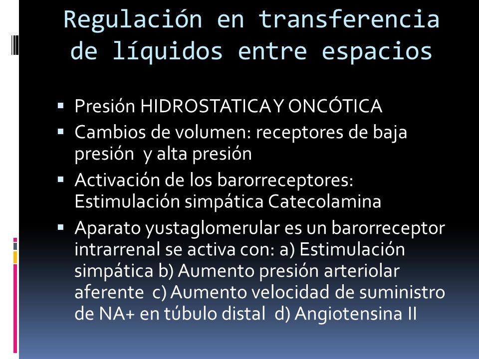 Regulación en transferencia de líquidos entre espacios Presión HIDROSTATICA Y ONCÓTICA Cambios de volumen: receptores de baja presión y alta presión Activación de los barorreceptores: Estimulación simpática Catecolamina Aparato yustaglomerular es un barorreceptor intrarrenal se activa con: a) Estimulación simpática b) Aumento presión arteriolar aferente c) Aumento velocidad de suministro de NA+ en túbulo distal d) Angiotensina II