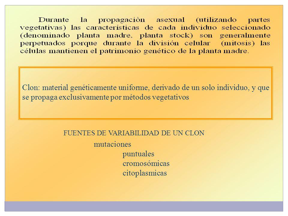 Clon: material genéticamente uniforme, derivado de un solo individuo, y que se propaga exclusivamente por métodos vegetativos FUENTES DE VARIABILIDAD