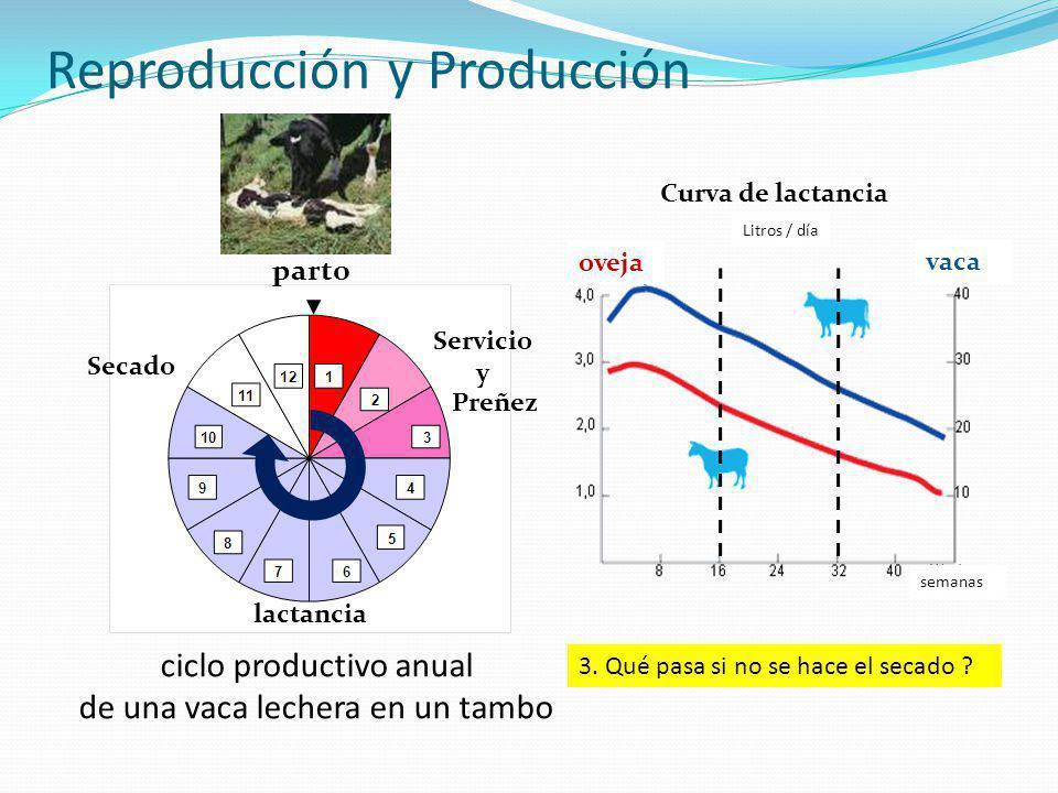 Reproducción y Producción ciclo productivo anual de una vaca lechera en un tambo parto Servicio y Preñez Secado lactancia Curva de lactancia oveja vaca semanas Litros / día 3.