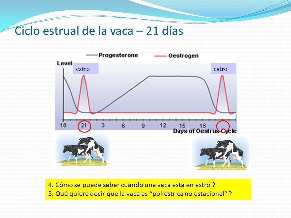 Ciclo estrual de la vaca – 21 días estro 4. Cómo se puede saber cuando una vaca está en estro ? 5. Qué quiere decir que la vaca es poliéstrica no esta