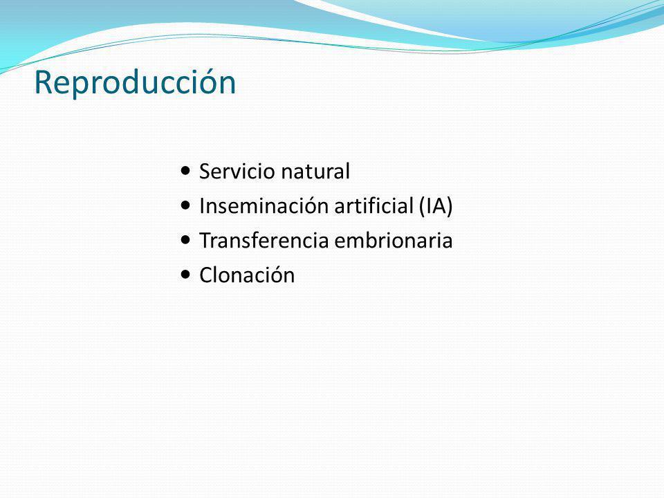 Reproducción Servicio natural Inseminación artificial (IA) Transferencia embrionaria Clonación