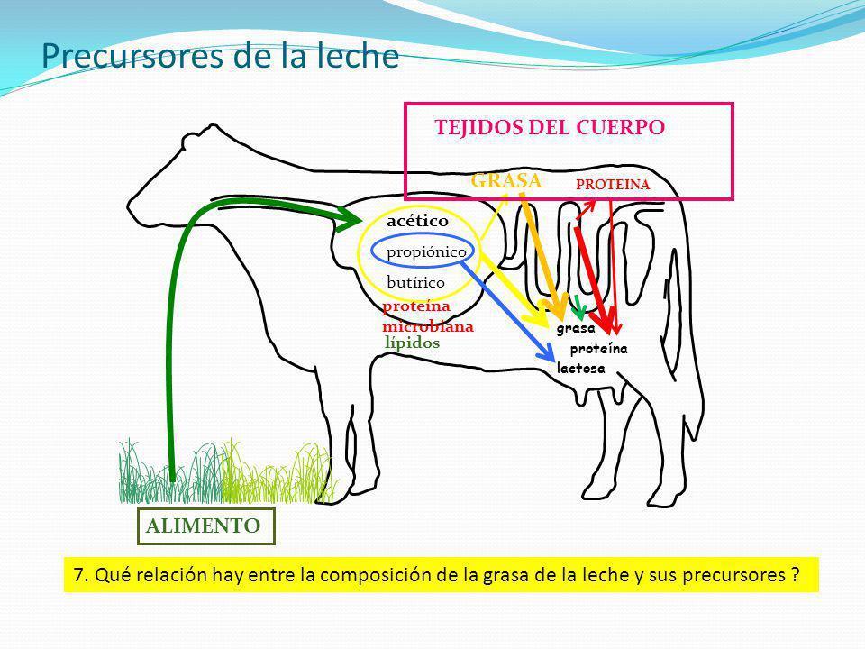 Precursores de la leche acético propiónico butírico GRASA PROTEINA lactosa proteína grasa TEJIDOS DEL CUERPO proteína microbiana ALIMENTO 7. Qué relac