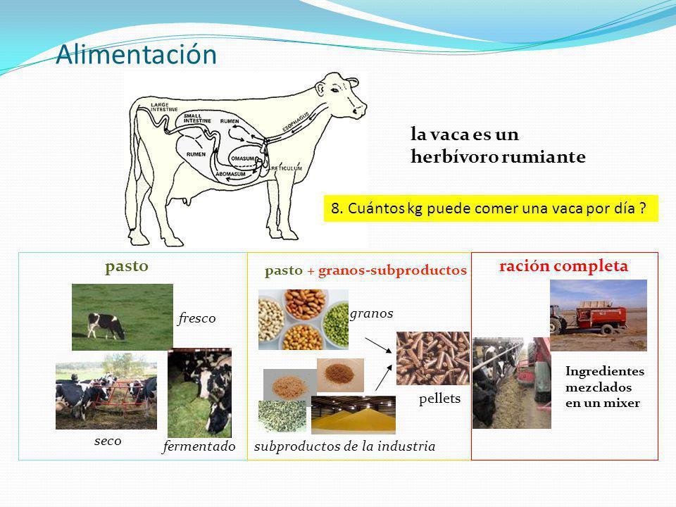 Alimentación la vaca es un herbívoro rumiante pasto pasto + granos-subproductos ración completa fresco seco fermentado granos subproductos de la indus