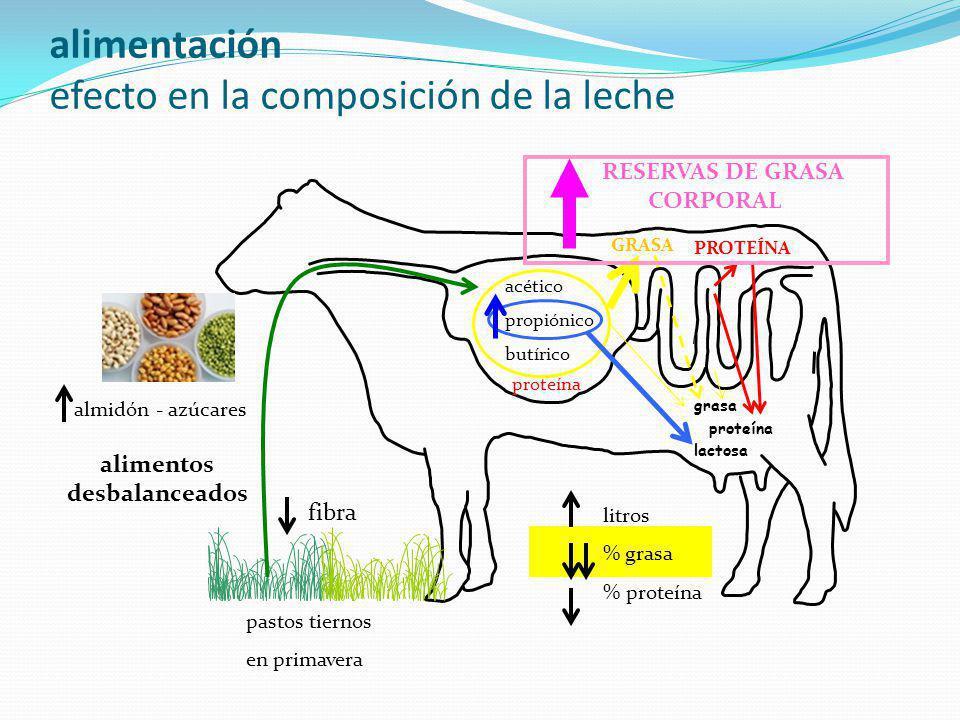 alimentación efecto en la composición de la leche acético propiónico butírico GRASA PROTEÍNA lactosa proteína grasa RESERVAS DE GRASA CORPORAL almidón