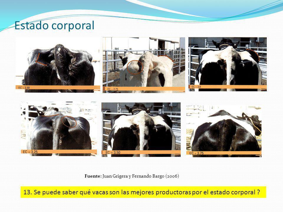 Estado corporal Fuente: Juan Grigera y Fernando Bargo (2006) 13. Se puede saber qué vacas son las mejores productoras por el estado corporal ?