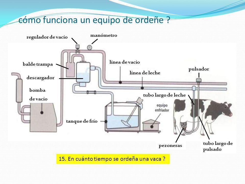 cómo funciona un equipo de ordeñe ? regulador de vacío bomba de vacío manómetro descargador balde trampa línea de vacío línea de leche tubo largo de l