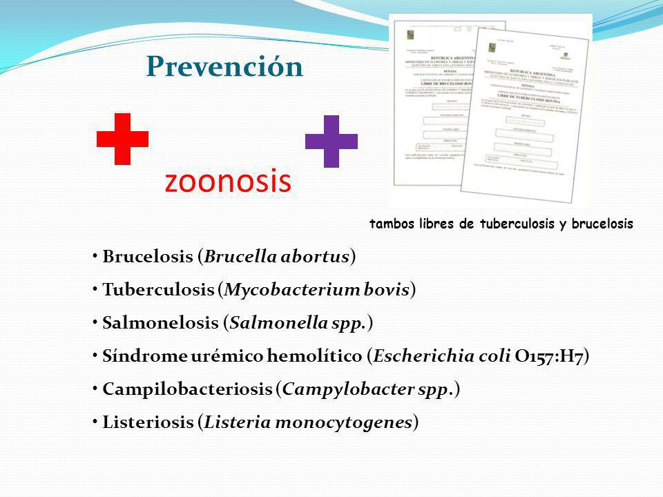 zoonosis Brucelosis (Brucella abortus) Tuberculosis (Mycobacterium bovis) Salmonelosis (Salmonella spp.) Síndrome urémico hemolítico (Escherichia coli O157:H7) Campilobacteriosis (Campylobacter spp.) Listeriosis (Listeria monocytogenes) tambos libres de tuberculosis y brucelosis Prevención