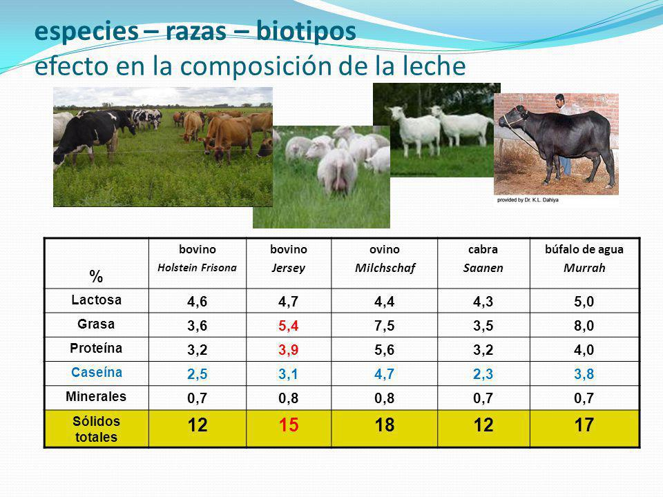 especies – razas – biotipos efecto en la composición de la leche % bovino Holstein Frisona bovino Jersey ovino Milchschaf cabra Saanen búfalo de agua Murrah Lactosa 4,64,74,44,35,0 Grasa 3,65,47,53,58,0 Proteína 3,23,95,63,24,0 Caseína 2,53,14,72,33,8 Minerales 0,70,8 0,7 Sólidos totales 1215181217