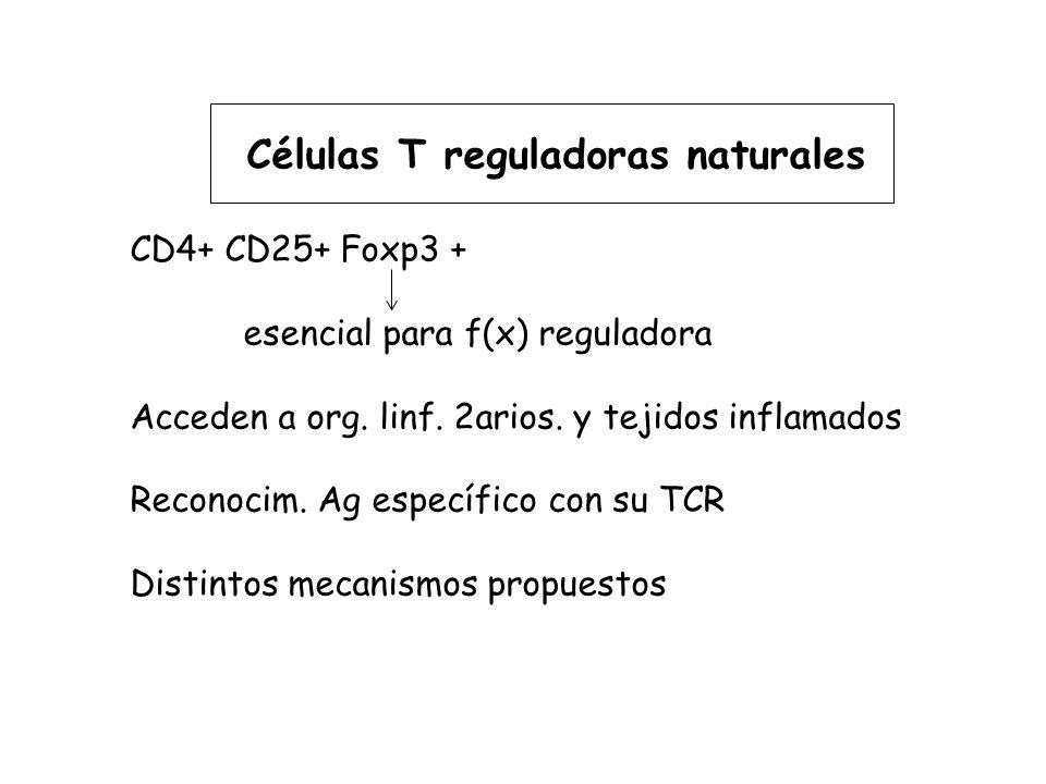 Células T reguladoras naturales CD4+ CD25+ Foxp3 + esencial para f(x) reguladora Acceden a org.