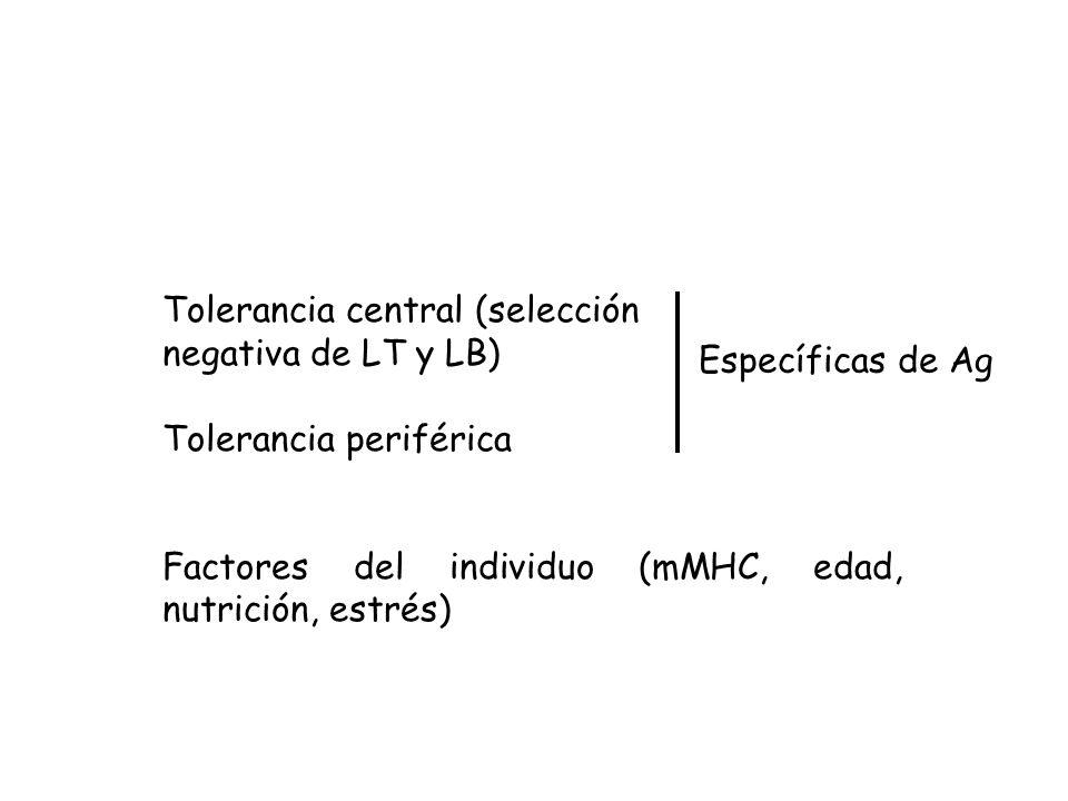 Tolerancia central (selección negativa de LT y LB) Tolerancia periférica Factores del individuo (mMHC, edad, nutrición, estrés) Específicas de Ag