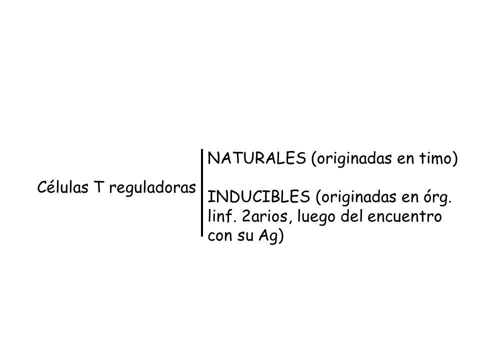 NATURALES (originadas en timo) INDUCIBLES (originadas en órg.