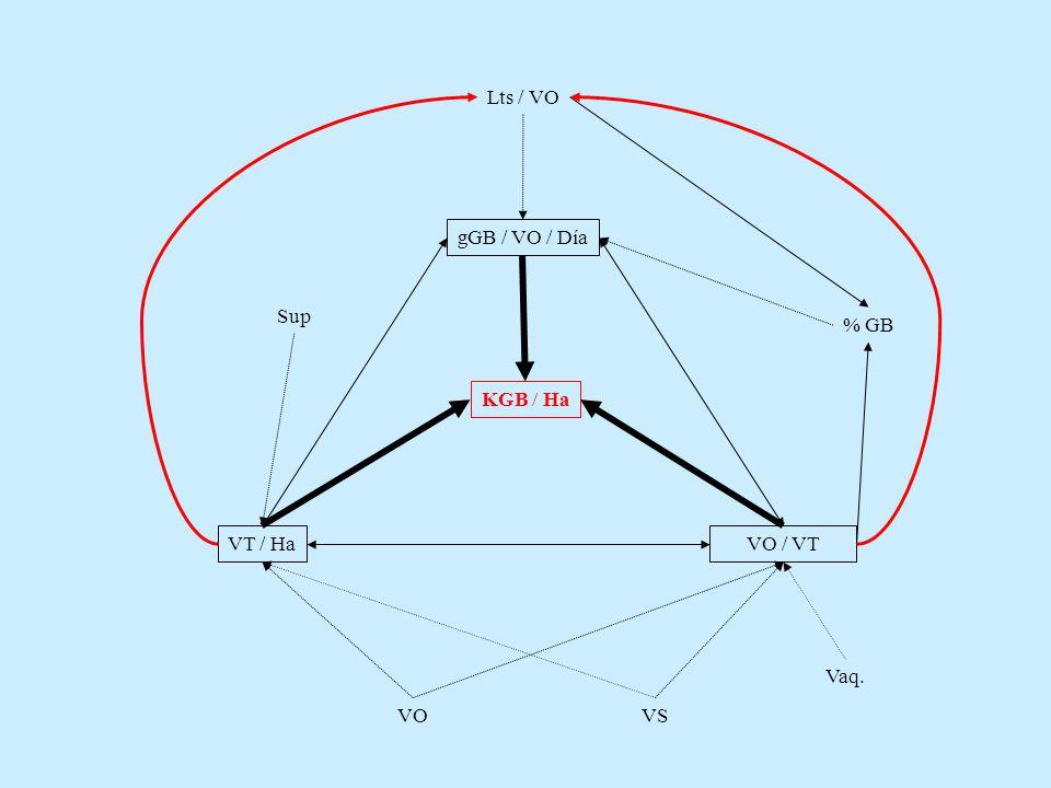 KGB / Ha VOVS Sup Lts / VO % GB gGB / VO / Día VT / HaVO / VT