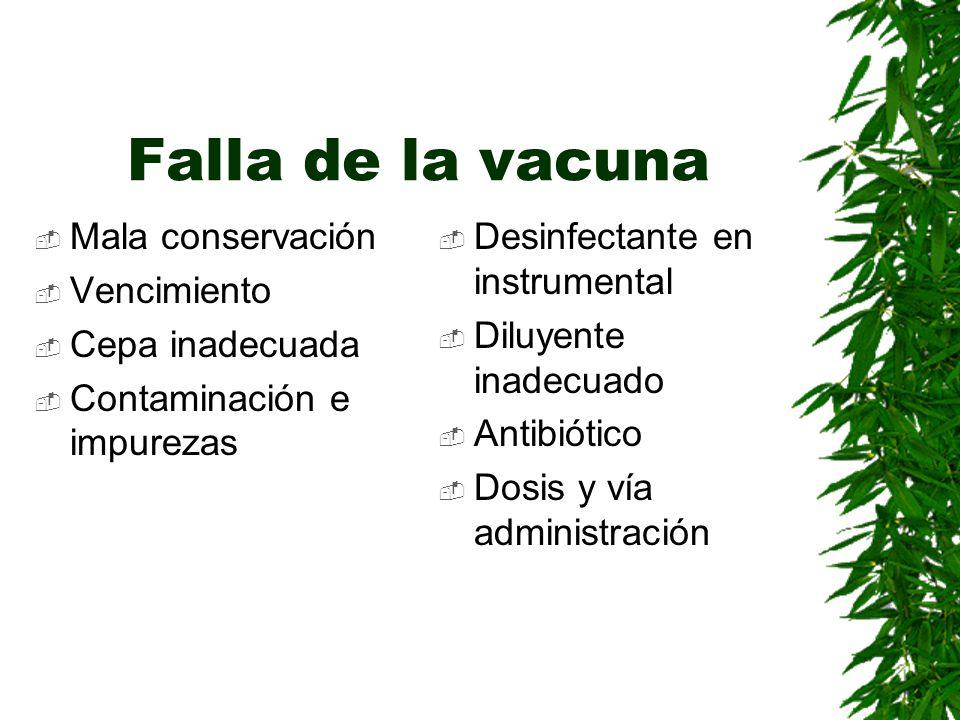 Falla de la vacuna Mala conservación Vencimiento Cepa inadecuada Contaminación e impurezas Desinfectante en instrumental Diluyente inadecuado Antibiót