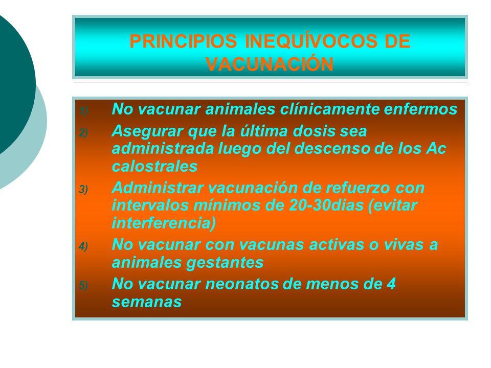 PRINCIPIOS INEQUÍVOCOS DE VACUNACIÓN 1) No vacunar animales clínicamente enfermos 2) Asegurar que la última dosis sea administrada luego del descenso