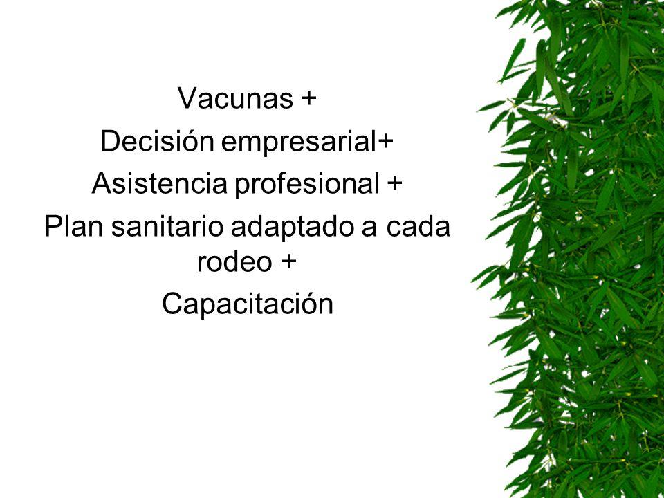 Vacunas + Decisión empresarial+ Asistencia profesional + Plan sanitario adaptado a cada rodeo + Capacitación