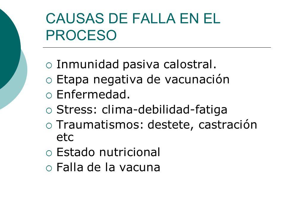 CAUSAS DE FALLA EN EL PROCESO Inmunidad pasiva calostral. Etapa negativa de vacunación Enfermedad. Stress: clima-debilidad-fatiga Traumatismos: destet