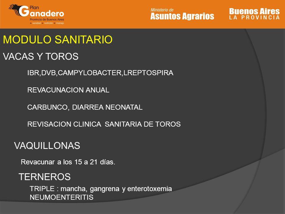 MODULO SANITARIO VACAS Y TOROS IBR,DVB,CAMPYLOBACTER,LREPTOSPIRA REVACUNACION ANUAL CARBUNCO, DIARREA NEONATAL REVISACION CLINICA SANITARIA DE TOROS V