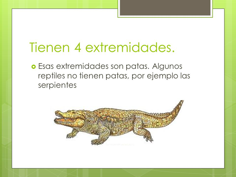 Tienen 4 extremidades. Esas extremidades son patas. Algunos reptiles no tienen patas, por ejemplo las serpientes
