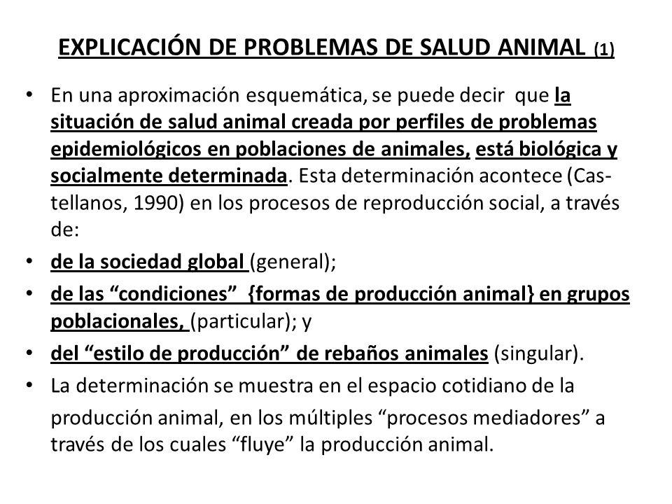 EXPLICACIÓN DE PROBLEMAS DE SALUD ANIMAL (2).I. Espacio general de la sociedad.