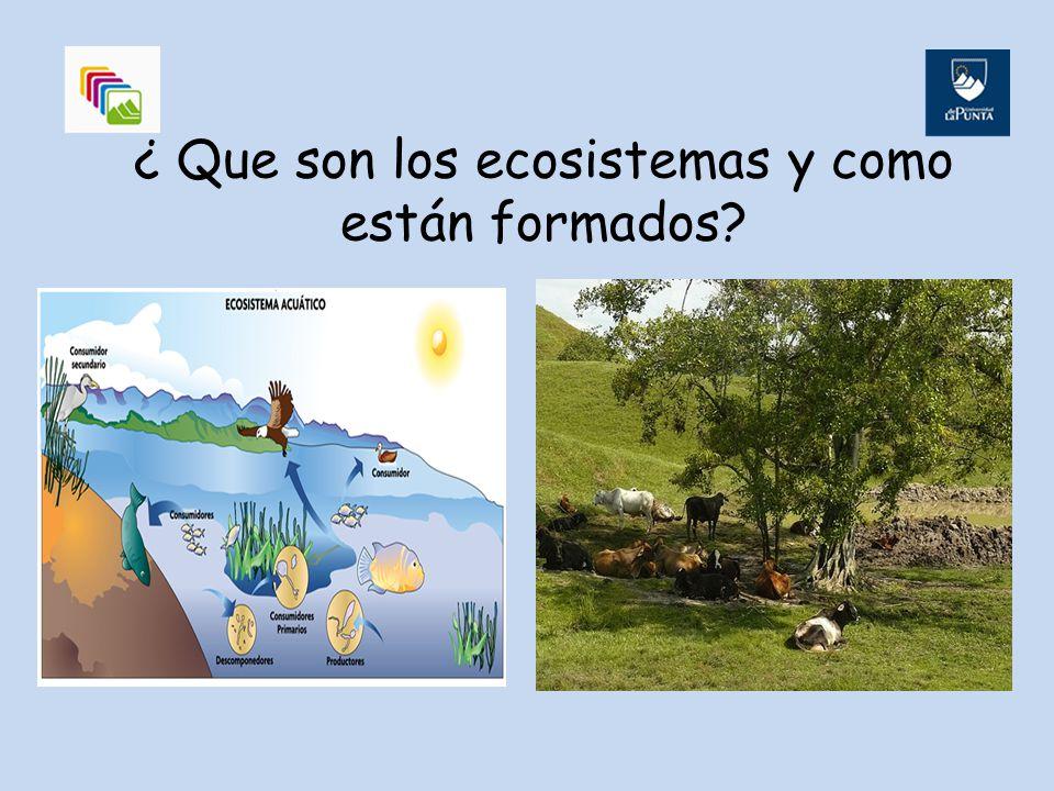 Un ecosistema es una porción de la biosfera, que está formado por : Componentes Abióticos ( no tienen vida) por ejemplo Bióticos (tienen vida)por ejemplo