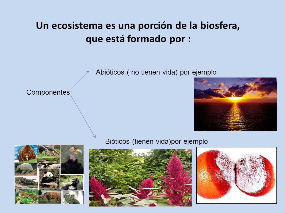Un ecosistema es una porción de la biosfera, que está formado por : Componentes Abióticos ( no tienen vida) por ejemplo Bióticos (tienen vida)por ejem