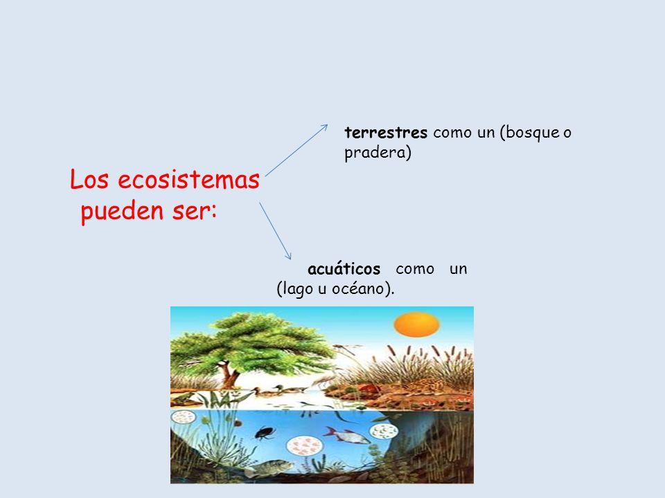 ¡Los ecosistemas están formados por comunidades.
