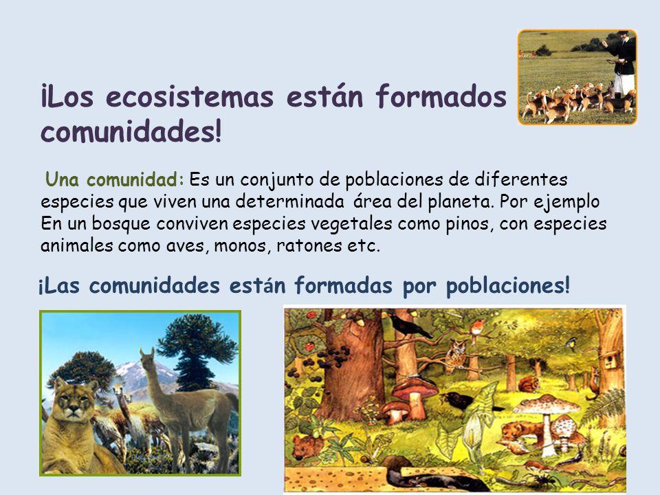 ¡Los ecosistemas están formados por comunidades! Una comunidad: Es un conjunto de poblaciones de diferentes especies que viven una determinada área de