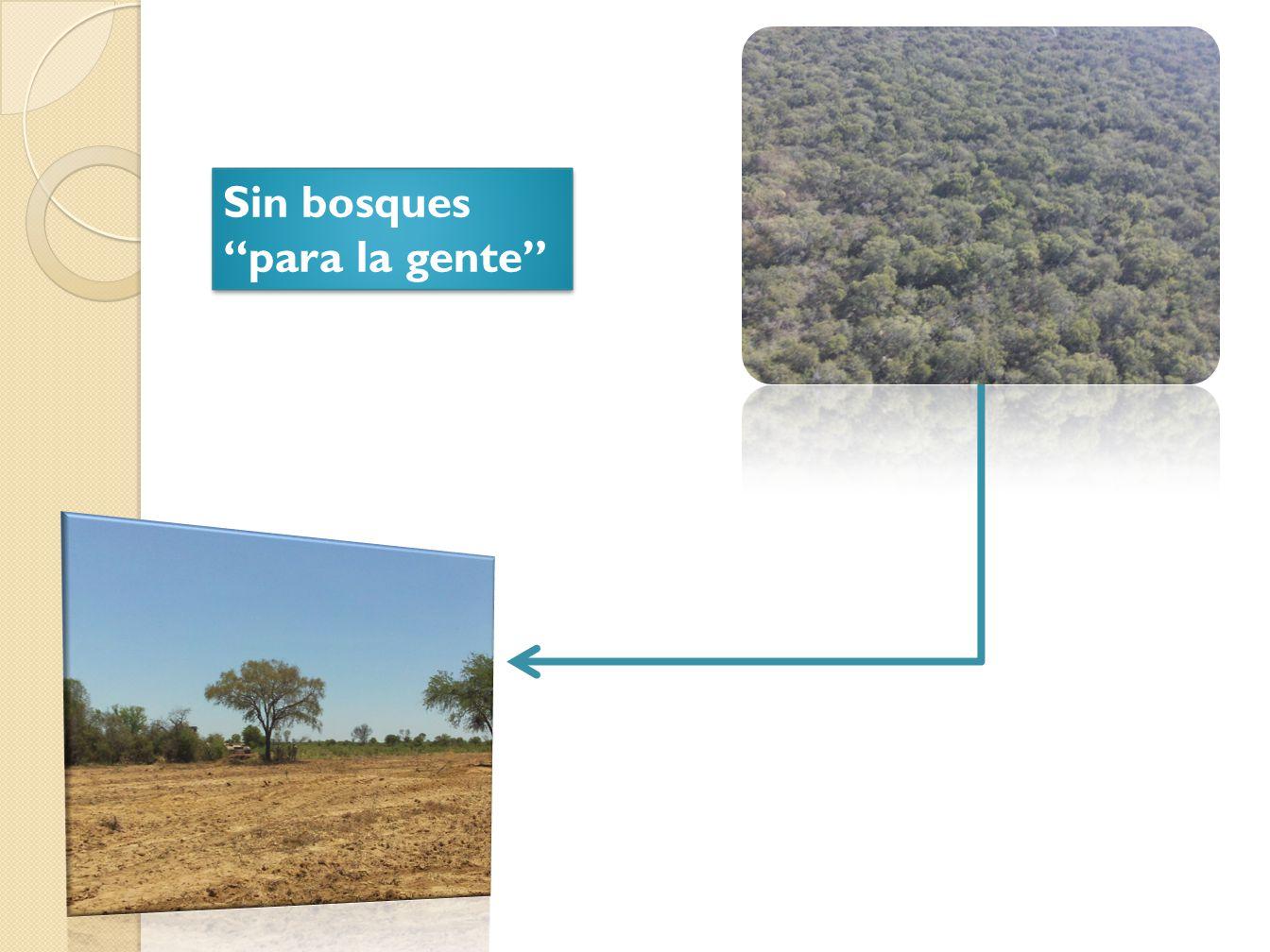 Sin bosques para la gente