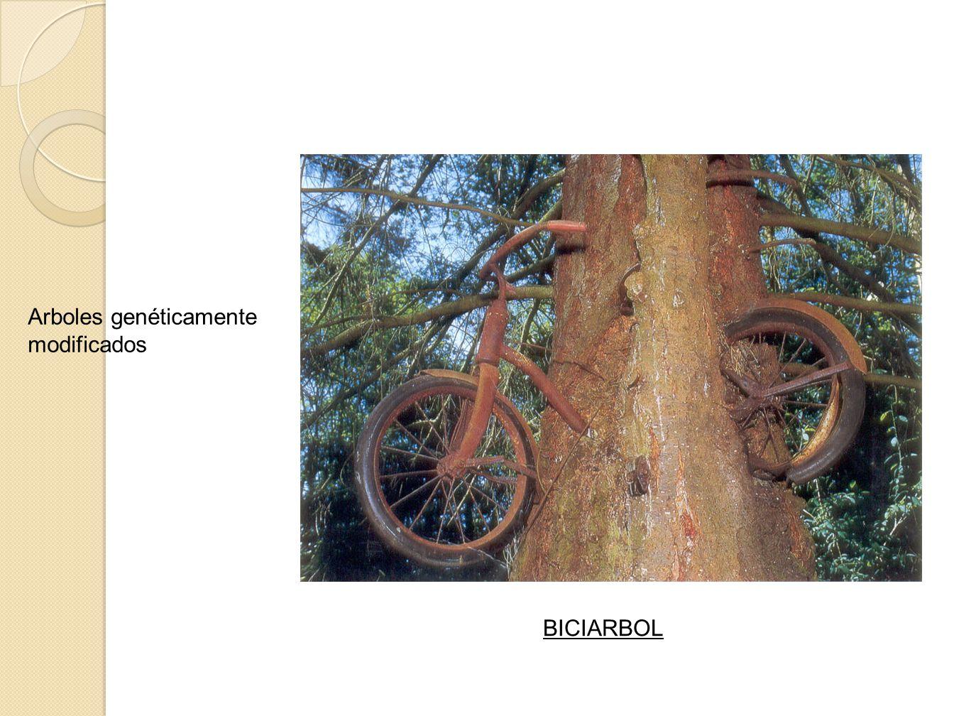 Arboles genéticamente modificados BICIARBOL