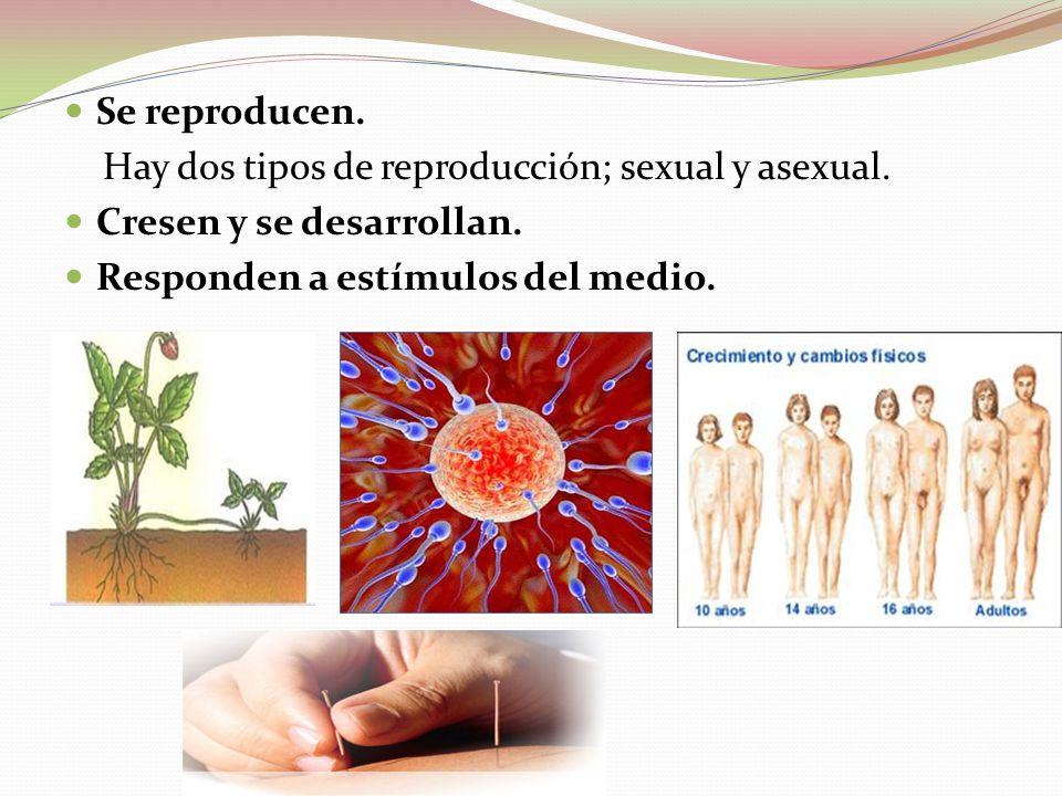 Se reproducen. Hay dos tipos de reproducción; sexual y asexual. Cresen y se desarrollan. Responden a estímulos del medio.